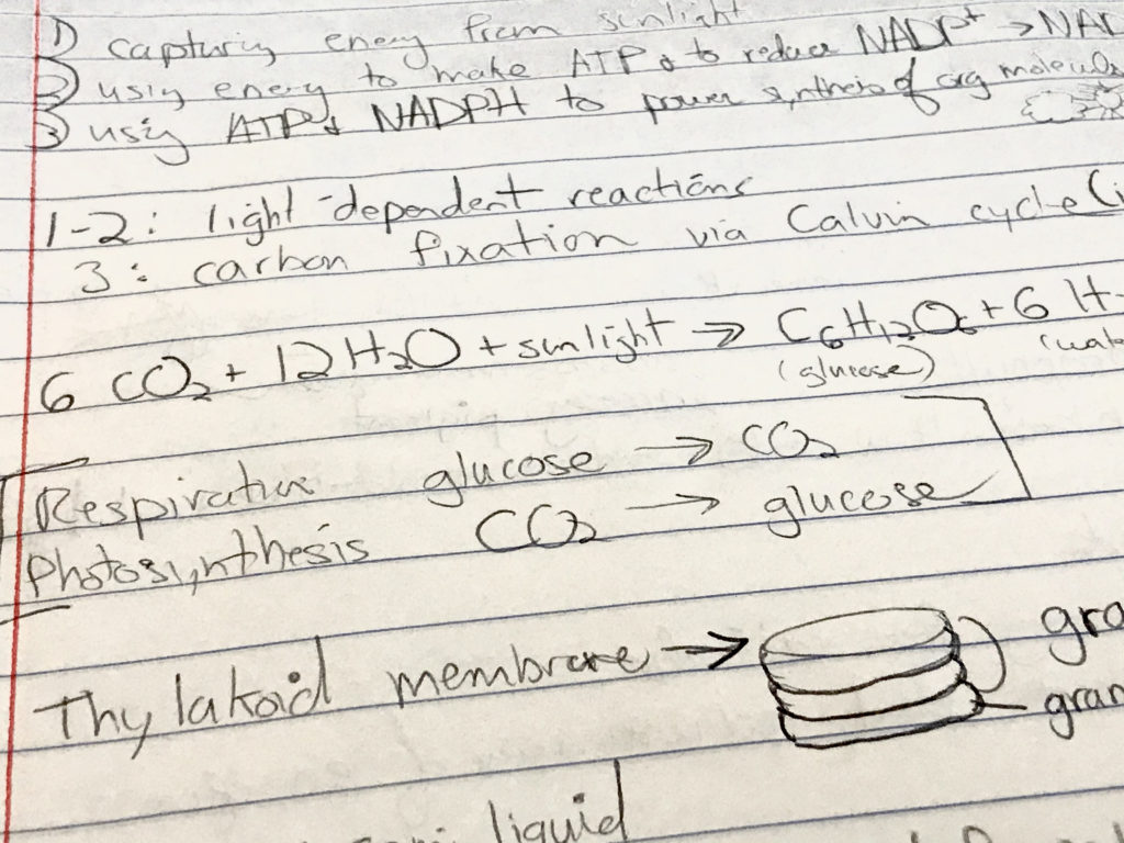 Biology photosynthesis notes.