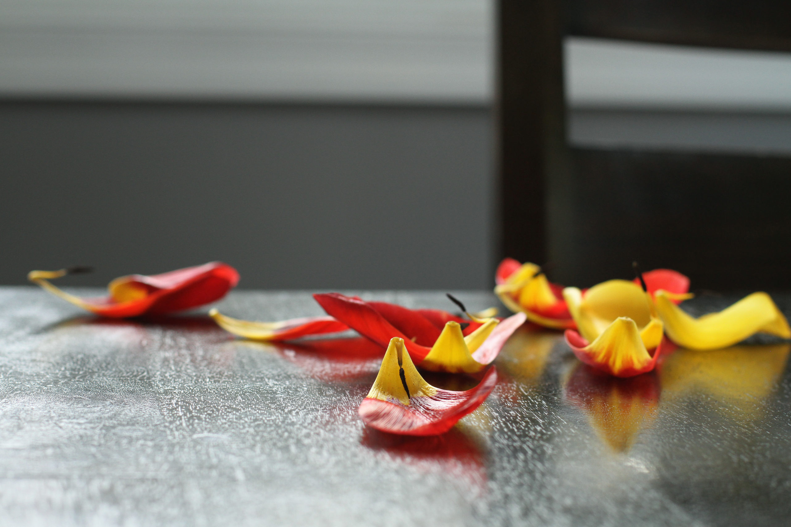 Tulip petals scattered on a table.